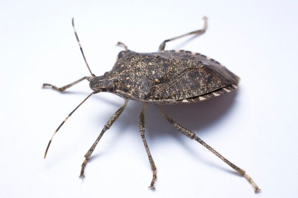 Is Your Home Infested with Any of These Occasional Pests?
