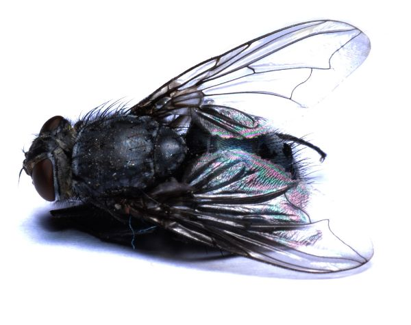 How to Get Rid of Flies in Your Home